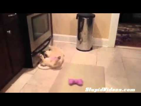 Dog Learns To Play Catch the Hard Way