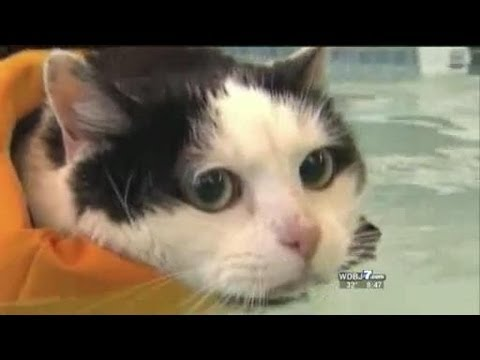 Umm…This Is a Swimming Cat