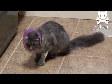 A Cat's Day Goes From Bad to Worse