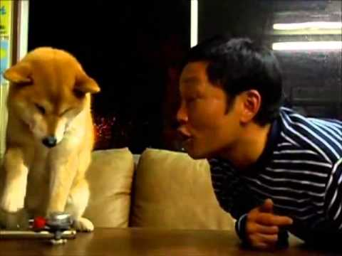 Dog Does Not Want to Be Kissed!