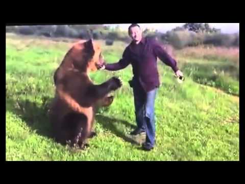 Video: Check Out This Trained Bear!