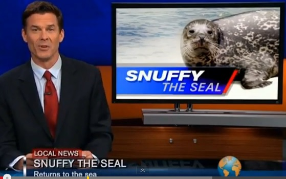 Video: Snuffy the Seal