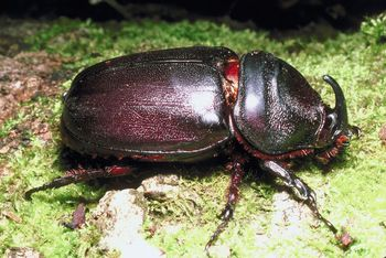 Audio: The Bugs are Being Jerks This Year