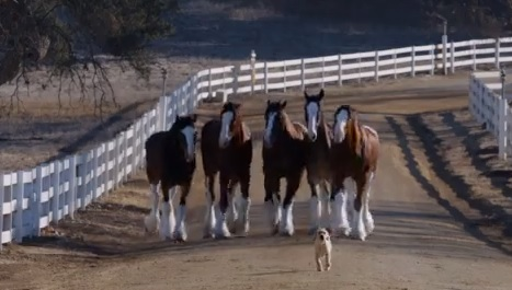 Video: The New Clydesdale Super Bowl Commercial