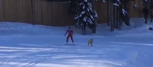 Video: Oh, Just a Stray Dog Invading Olympic Events