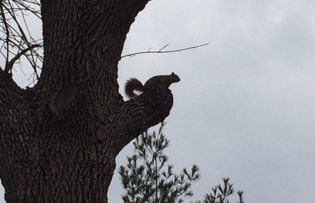Kurt's Blog: The Squirrels And I Share a Brain