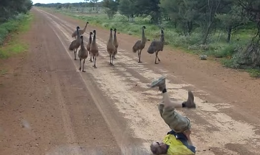 How To Attract Emus